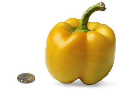 bell-pepper